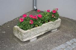 Insolites jardinières.