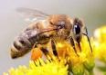 """Les abeilles: récapitulatif albums et étude """"scientifique"""""""