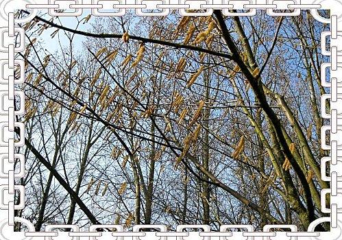 Nosettier-032011.jpg