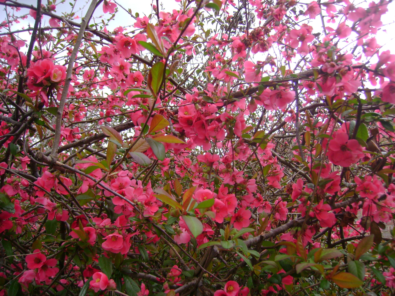 Les fleurs de printemps de mon jardin for Fleurs jardin printemps