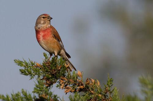 L'hécatombe des oiseaux dans le Nord-Pas-de-Calais