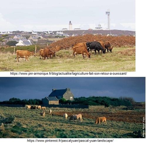 Les vaches, Éliane, Victoria, Lenaïg, haïkus
