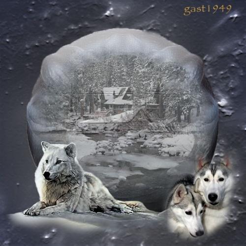 les loups auteur yoli
