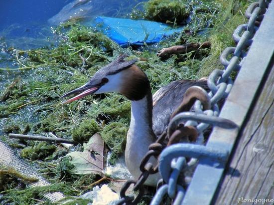 suisse 2009_oiseaux (10)