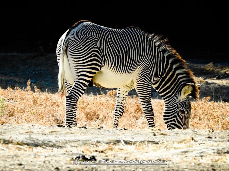Un safari photos sans prendre l'avion