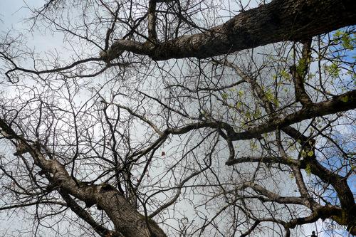 Le ciel et les hauts des arbres