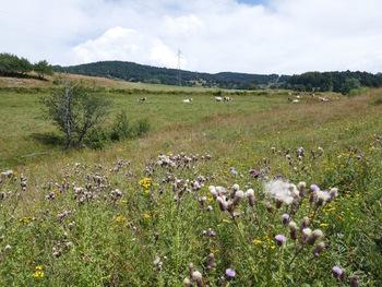 Prairies en direction du pla de l'Ous