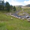 rassemblement des moutons