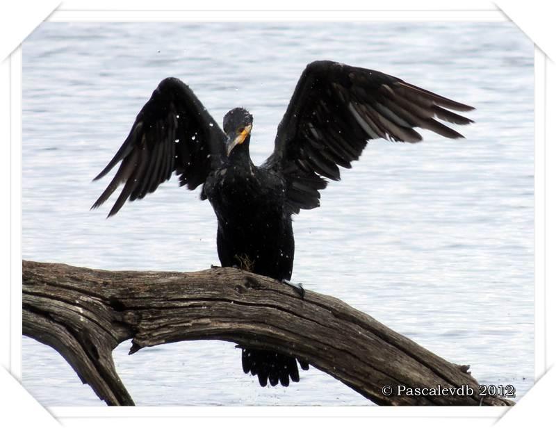Visite à la réserve ornithologique du Teich - 5/8