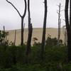 La Dune du Pyla à travers les pins