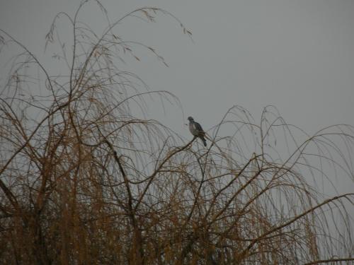 Sur une branche