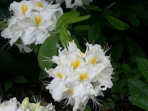 Diverses fleurs