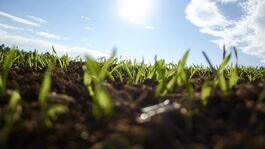 Qu'est ce que l'agriculture régénératrice?