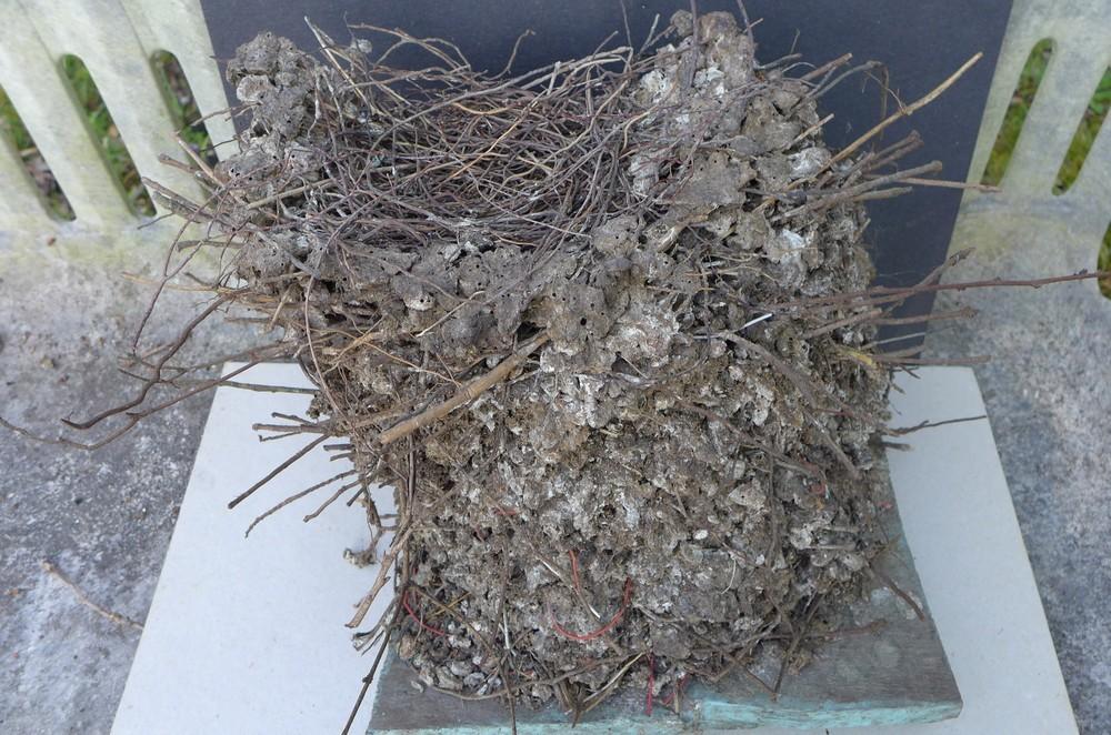 Le nid des tourterelles...