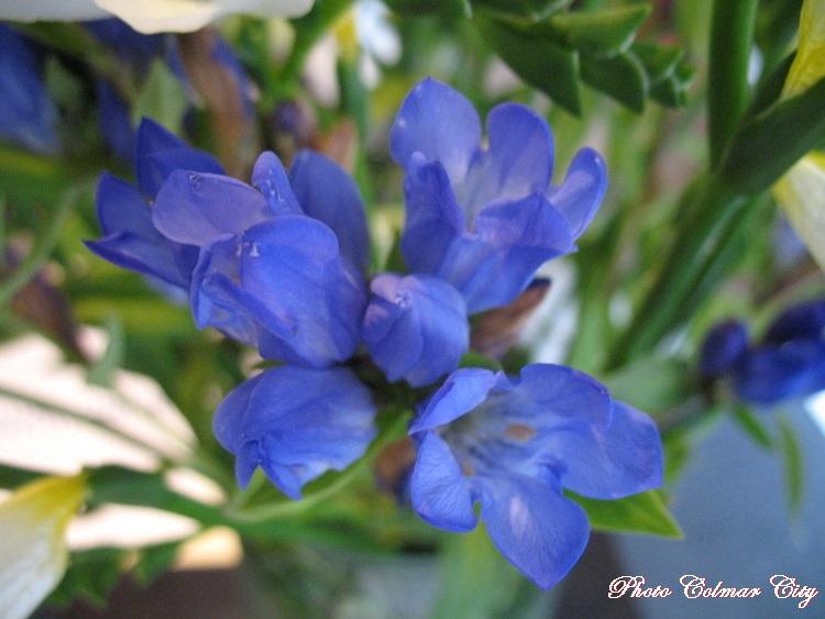 Des fleurs chez le coiffeur 36