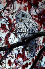 Dernière toile de Miriam Peters Rouyer.. Lien de sa galerie intégré.