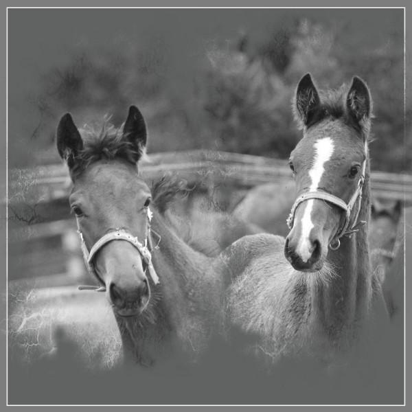 chevaux 01