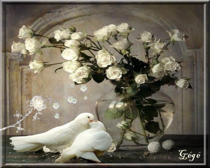 Couple de colombes