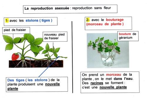 La reproduction des végétaux
