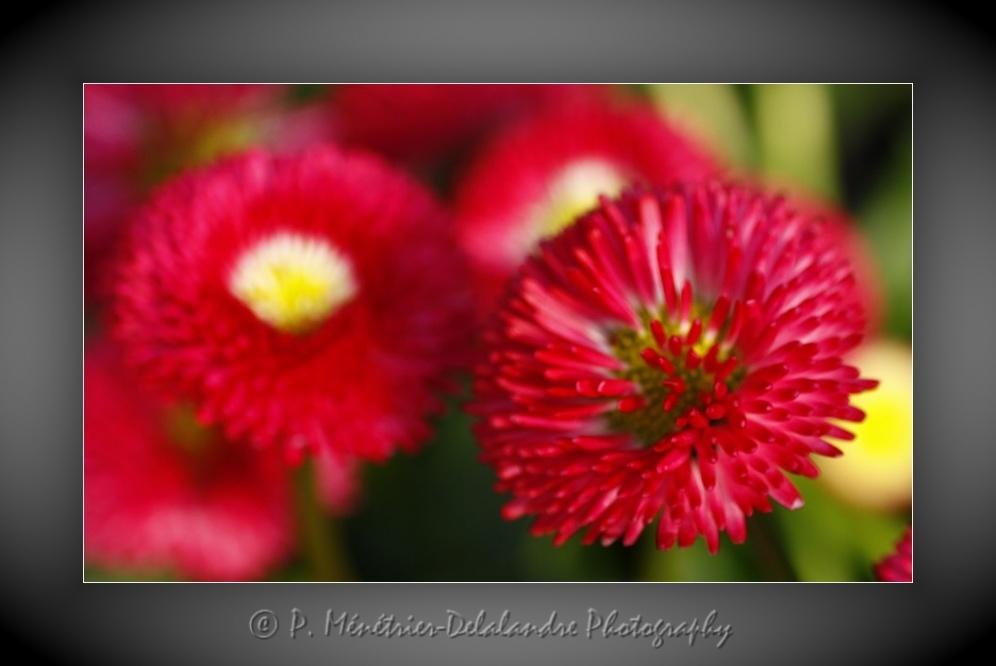 Ponpons fleuris...