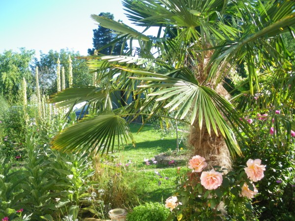 9888-jardin-002.jpg