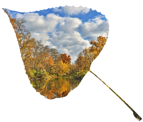 Feuilles d'automne 6
