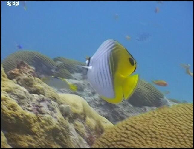 Plongee-Mickaelmas-Cay-0--88--border-copie-1.jpg