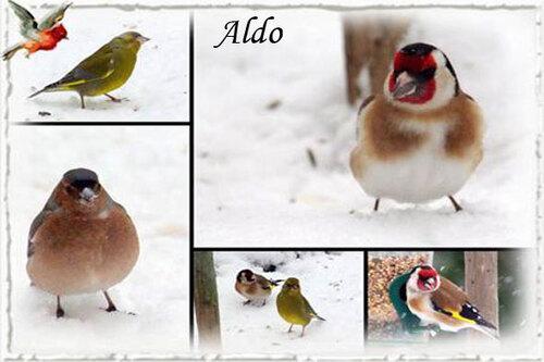 PPS Oiseaux en hiver
