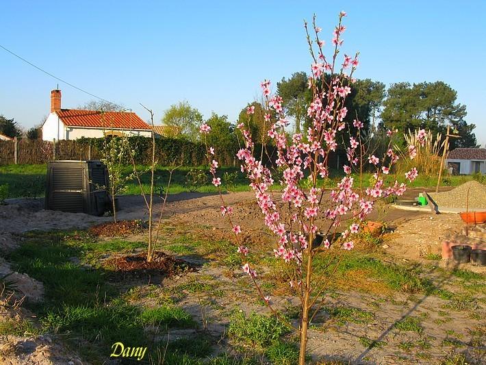 085 maison 03 2011