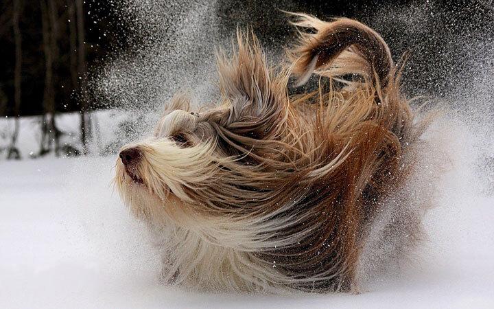 xx-animaux-dont-la-beaute-est-sublimee-par-les-couleurs-hivernales23