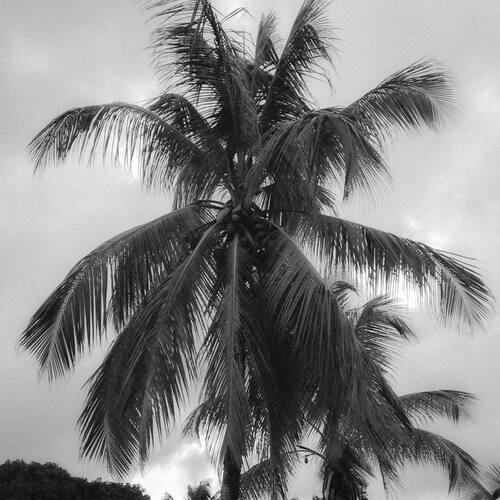 Défi 7 jours 7 photos en noir et blanc