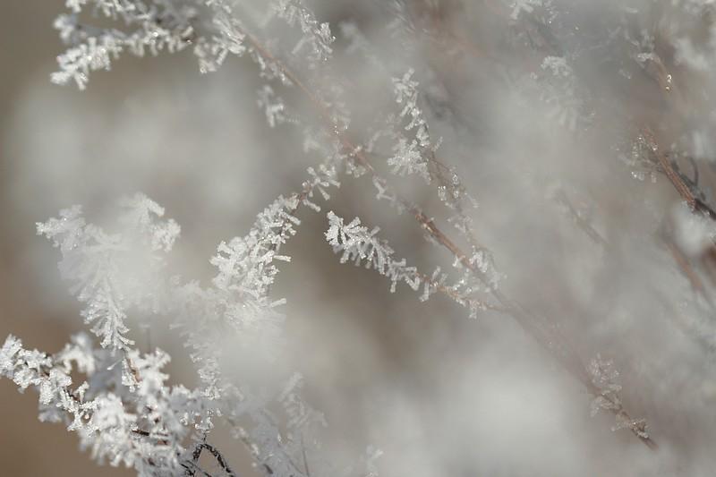 douceurs d'hiver