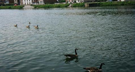 défilé des canards