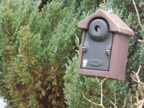 Recenssement des oiseaux du jardin