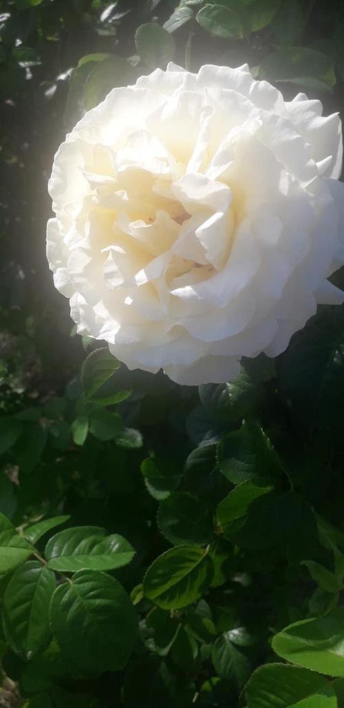 Bouquet du we