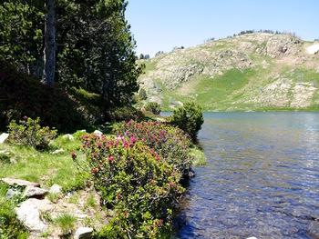 L'étang de l'Esparbé