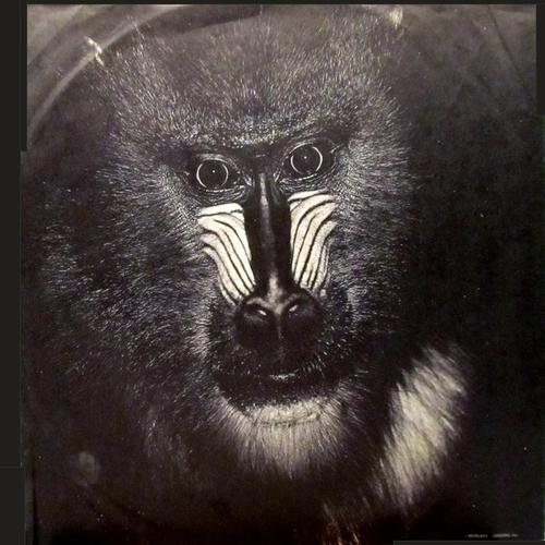 "1975 : Album "" Beast From The East "" United Artists Records UA-LA577-G [ US ]"