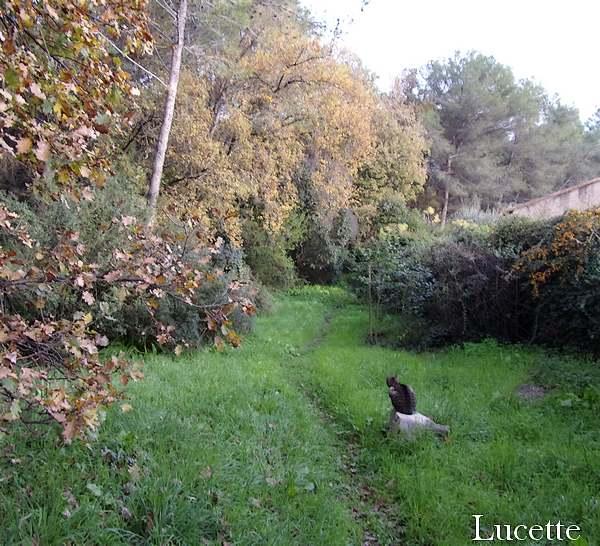 Sortie au jardin et promenade dans le bois