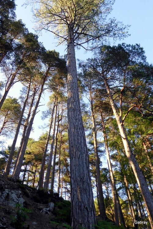 Écosse: Glencoe Lochan