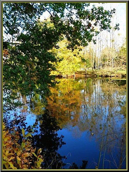 arbres--eau9-copie-1.jpg