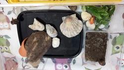 Nos escargots