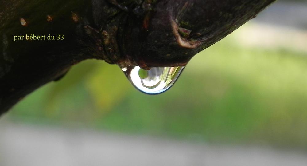 des gouttes d'eau au jardin