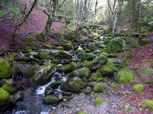 Torrent forestier