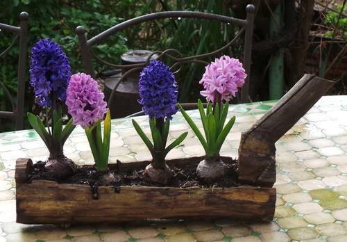 Les fleurs de l'hiver