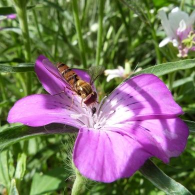 Entre violet, parme et améthyste...