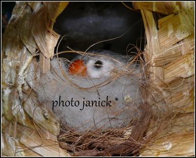 naissance de mandarin