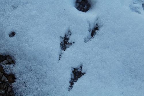 Empreintes dans la neige