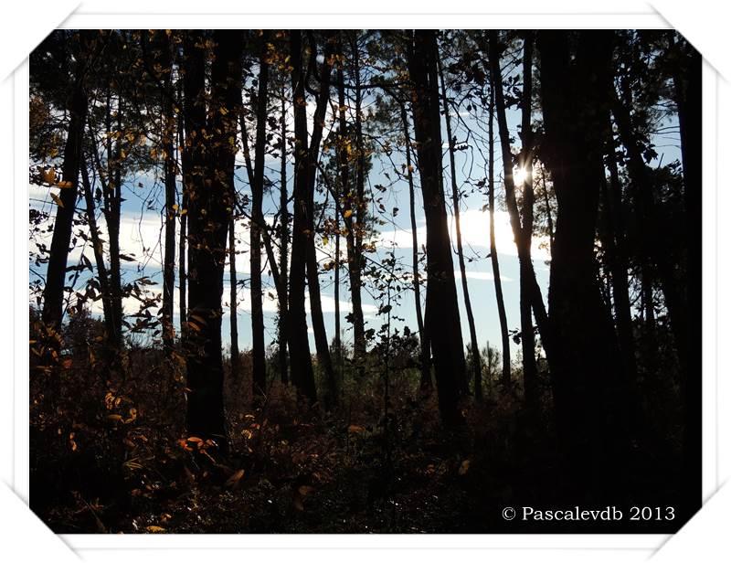 Promenade en forêt à la lisière du Barp - 1/5