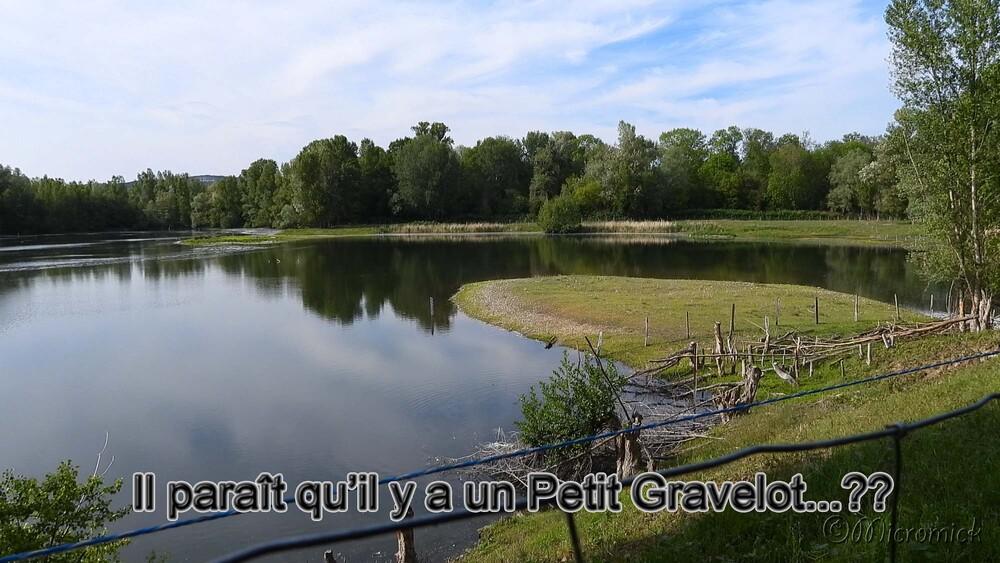 """Le """"Petit Gravelot """" (Charadrius dubius)"""