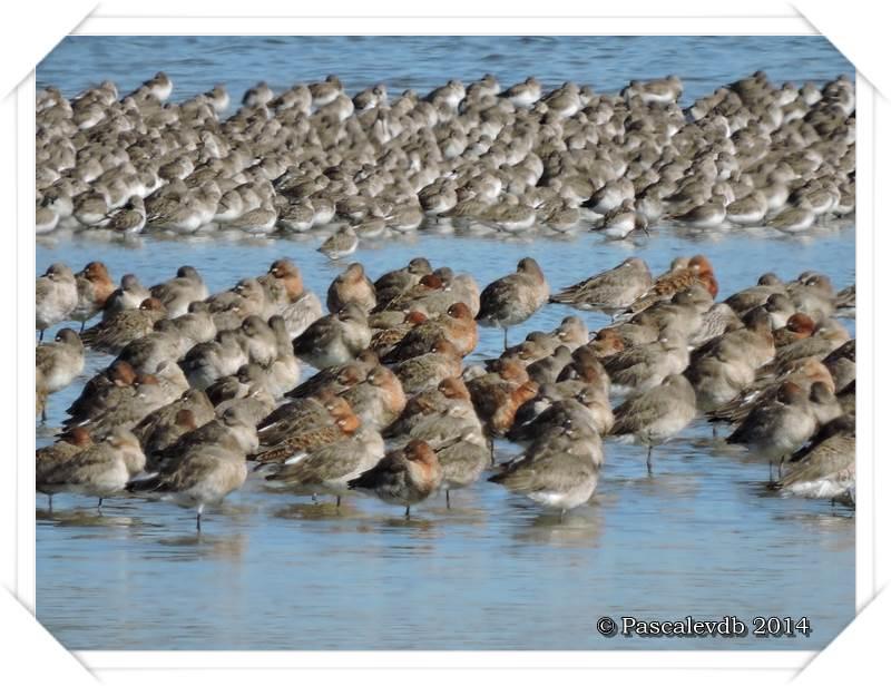 Réserve ornithologique du Teich - 2/9